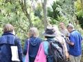 Banksia Gathering